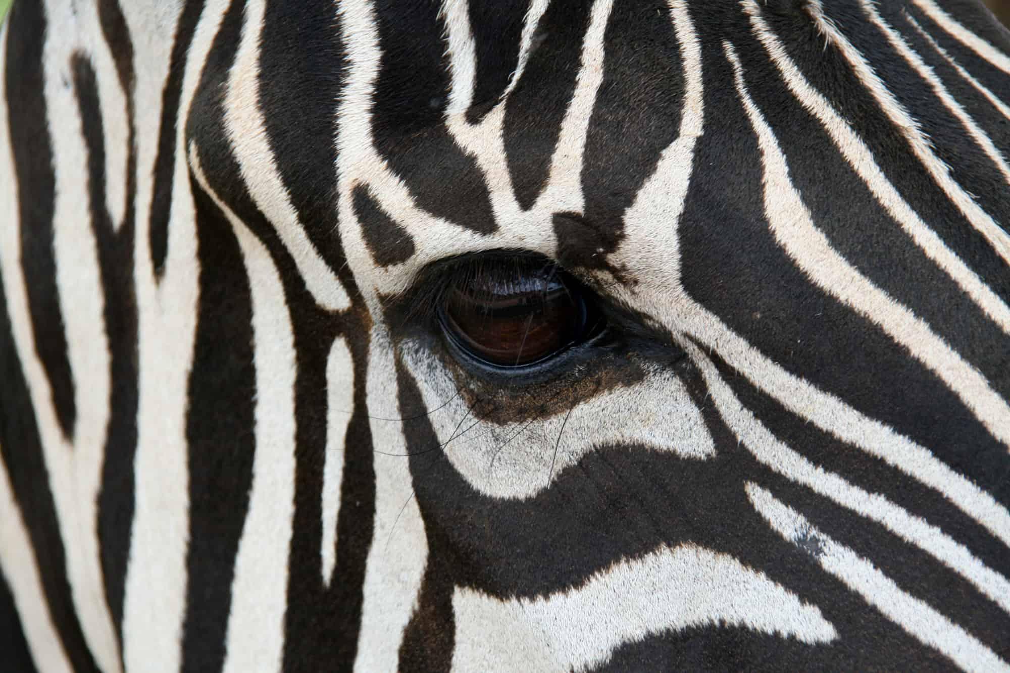 Best US Zoos Voted by Trekaroo Families - Trekaroo Blog
