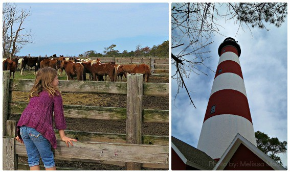 Chincoteague Ponies Assateague Lighthouse Eastern Shore of Virginia