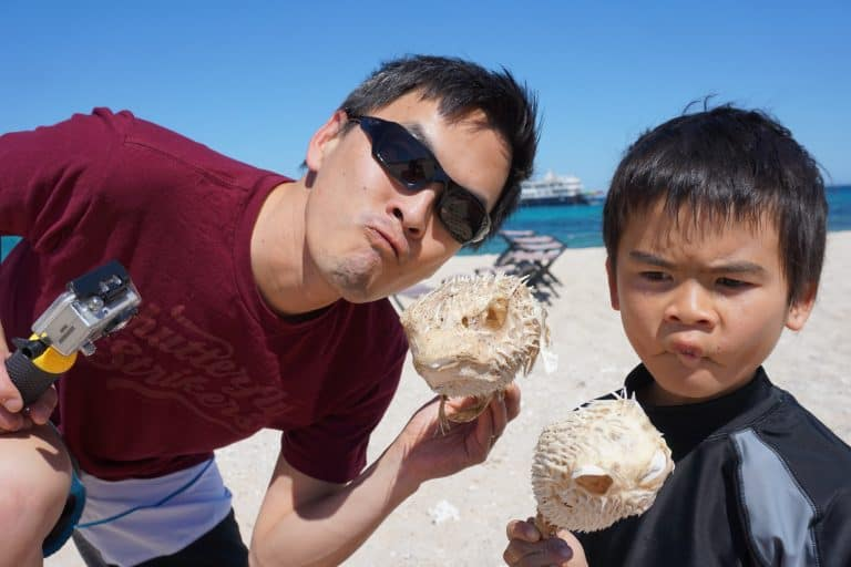 Uncruise Adventures review of the Sea of Cortez cruise Pufferfish skeletons from the Sea of Cortes