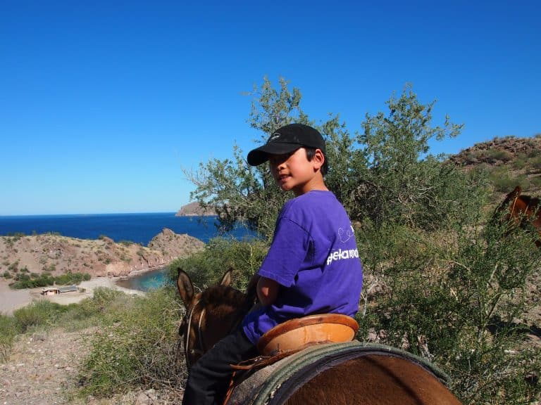 Uncruise Adventures review of the Sea of Cortez cruise Burro ride