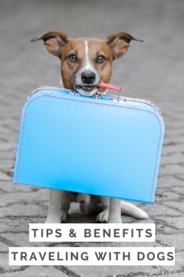 Taking the Dog Along: Tips for Traveling with your Dog