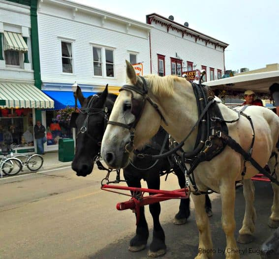 Mackinac Island Michigan Carriage Tour Horse