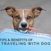 tips & benefits traveling with dog