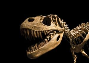 California Dinosaur Exhibits & Digs for Kids and Families 1