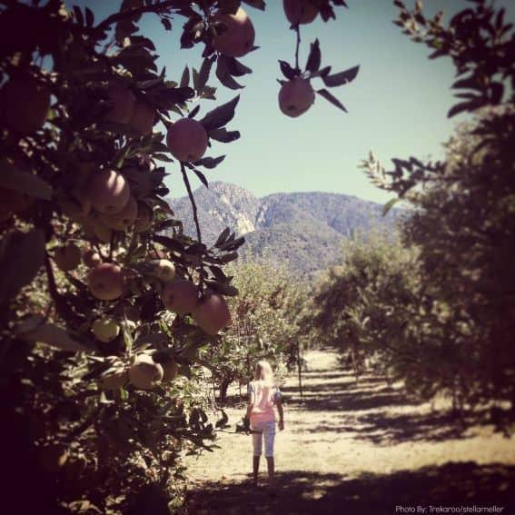 apple picking ideas