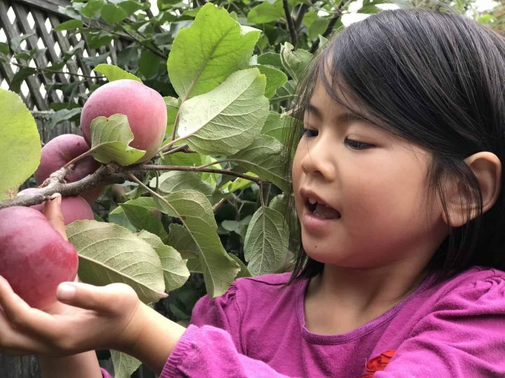 Apple Picking Orchards, Recipes, and Activities