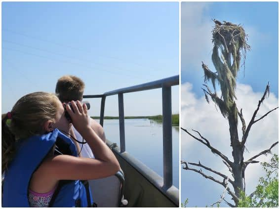 Birdwatching Osprey Nest Pascagoula River Eco Tours of South Mississippi