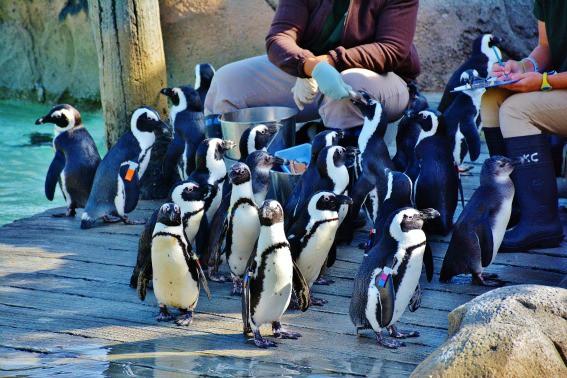 Penguins Maryland Zoo Baltimore