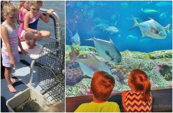South Carolina Aquarium Harbor Boat Nature Tour Morris Island Charleston