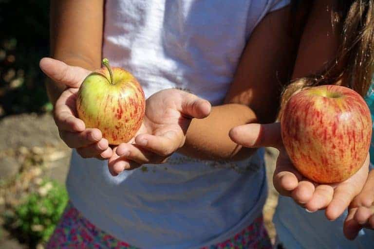 Apple Picking Orchards, Recipes, and Activities 1