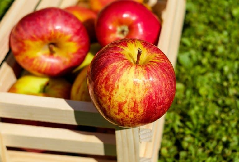 Apple Picking Orchards, Recipes, and Activities 2