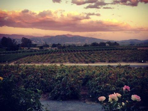 Kid-Friendly Sonoma Wine Country