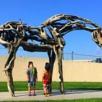 Pappajohn Sculpture Center Skeleton Horse