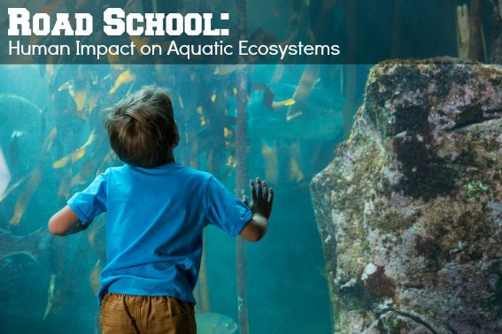 Road School Human Impact on Aquatic Ecosystems