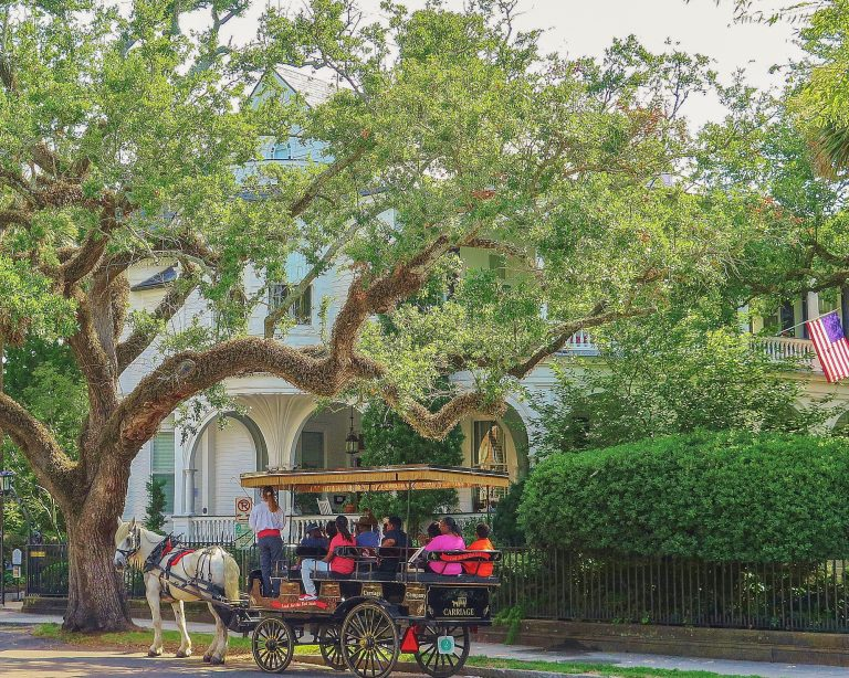 Things to do in Charleston SC for kids