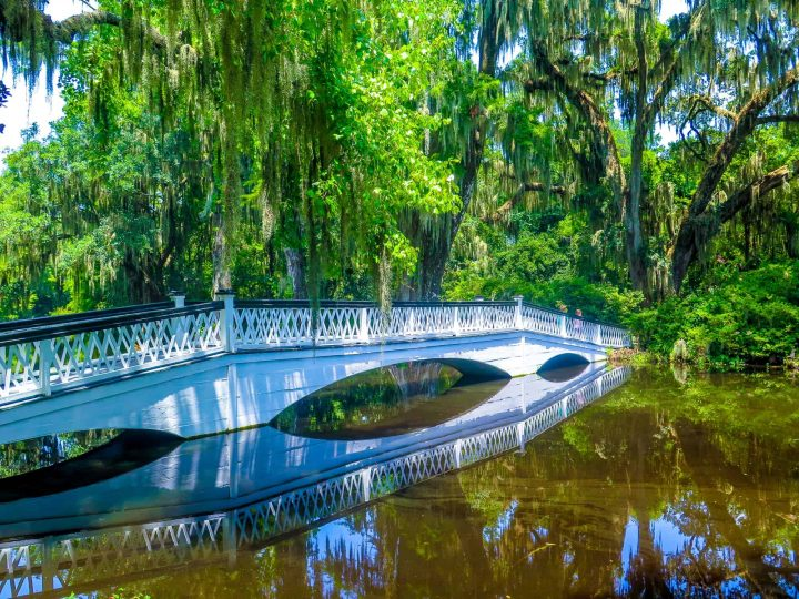 10 Fun Things to Do in Charleston, SC with Kids