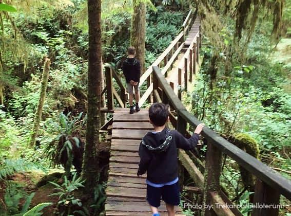 Vancouver-Rain-Forest-Trail-Trekaroo-Tofino