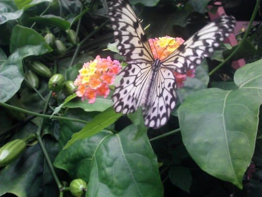butterflygarden