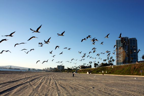Long Beach beaches: things for your family to do in Long Beach