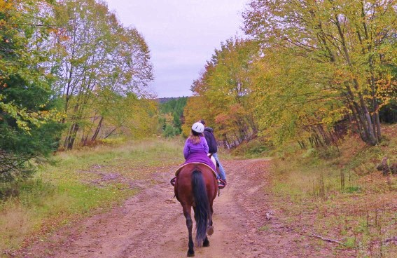 things to do in pennsylvania: a Trail Ride through Cook Forest