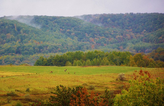 things to do in pennsylvania: explore Elk Country