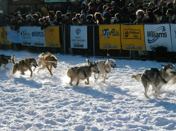 Iditarod sled dog anchorage what is there to do in Anchorage