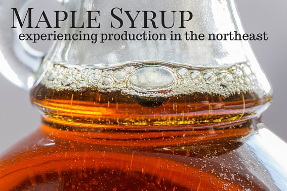 Maple Syrup Production- Where to See it in the Northeast