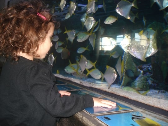 Top things for your family to do in Long Beach: long beach aquarium of the pacific