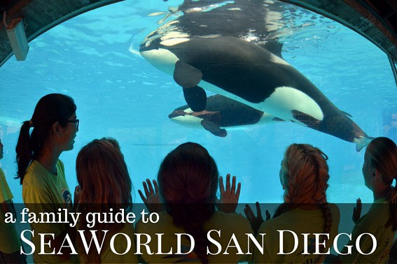 A Family Guide to SeaWorld San Diego with Kids- Rides, Shows, What to Eat, What to Do, and More