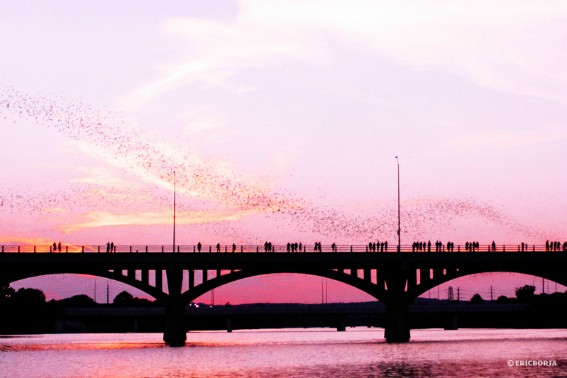 Bats-Congress-Avenue-Bridge-Austin-Texas-Trekaroo