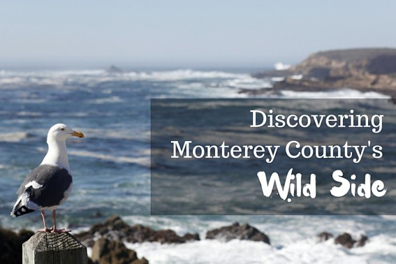 Discovering Monterey County's Wild Side: Outdoor adventures in Monterey offer fun for the whole family. From hiking to national parks to stunning views, here is what you should explore on your next vacation. #Monterey