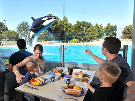 SeaWorld – A Family Guide to Exploring SeaWorld San Diego