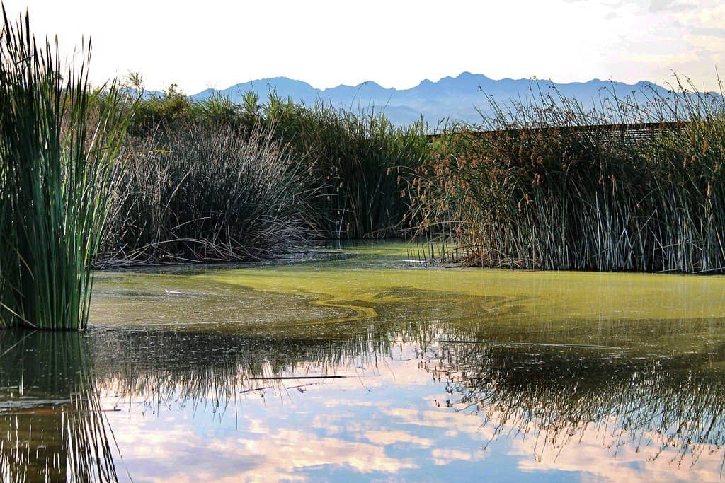 Visiting clark county wetlands is one of the great outdoor activities in Las Vegas