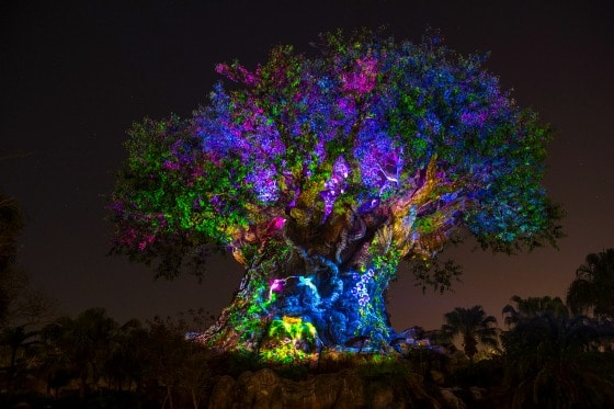 Disney Animal Kingdom's Tree of Life lit up at night is a sight to behold this summer at Walt Disney World