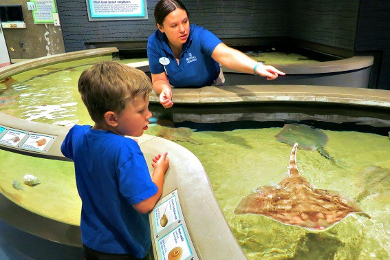 Day Trips from Washington DC: Visit the National Aquarium and Inner Harbor of Balitmore
