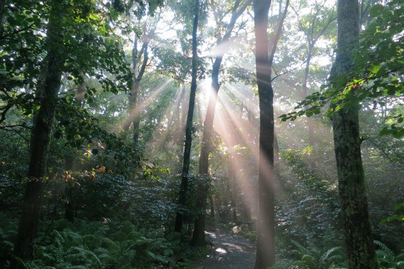 Day Trips from Washington DC: Visit the Central District of Shenandoah National Park
