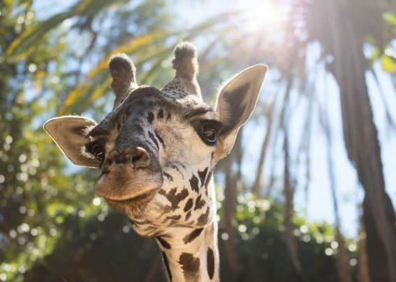 The Los Angeles Zoo and Botanical Gardens, located in Griffith Park, is a fabulous kid-friendly zoo that your family shouldn't miss.