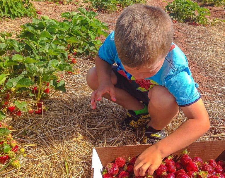 Fun Things to Do in Maryland with Kids Berry Picking
