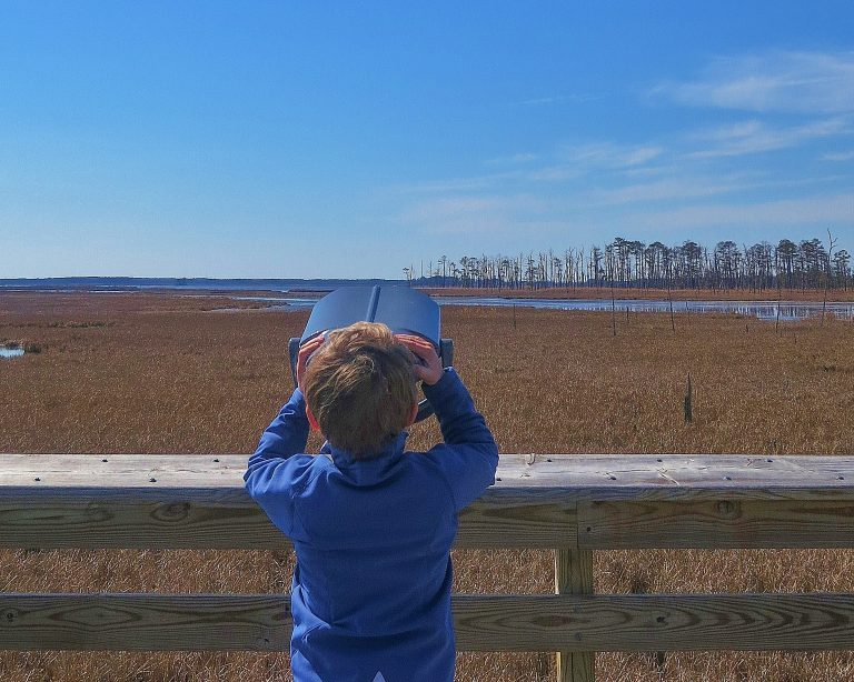 Places to Visit in Maryland Blackwater National Wildlife Refuge