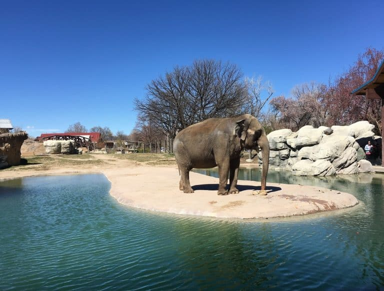 denver zoo by tiffany vaughn