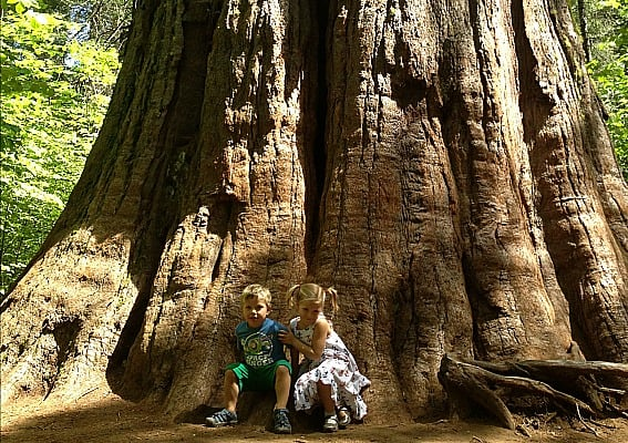 Calaveras Big Tree State Park