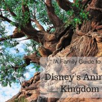 A Family Guide to Disney's Animal Kingdom