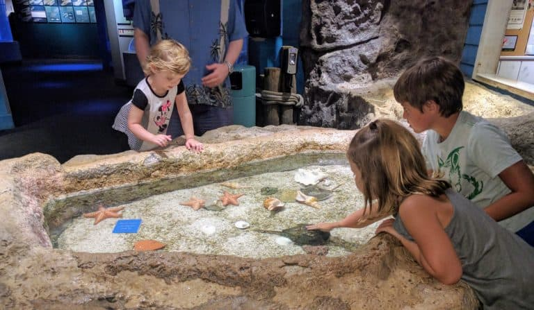 Things to Do in Port Aransas include visiting the Texas State Aquarium