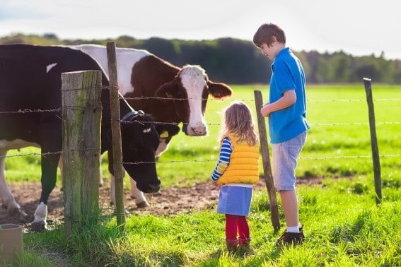 Visiting a farm for an immersive vacation can be a great way to get your kids to explore real food #realfoodrocks