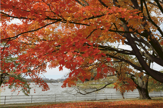 Explore Fall Foliage with Kids at the Potomac River, one of the best places to see fall color in the United States