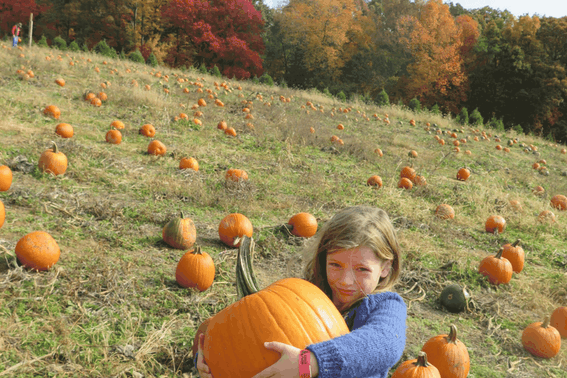 Fall Foliage with Kids: Visit a Pumpkin Patch