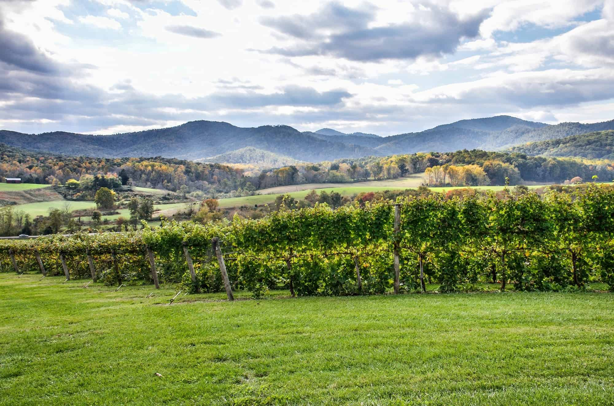 Family-Friendly Northern Virginia's Wine Country