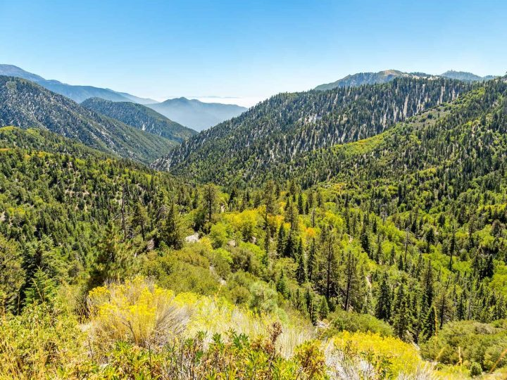 Beat the Heat in the San Bernardino National Forest