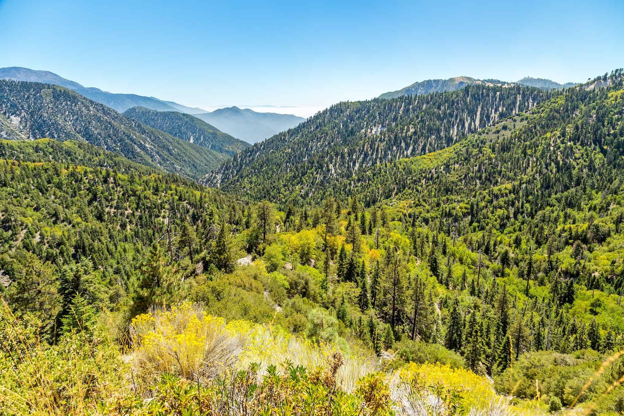 Beat the Heat in the San Bernardino National Forest