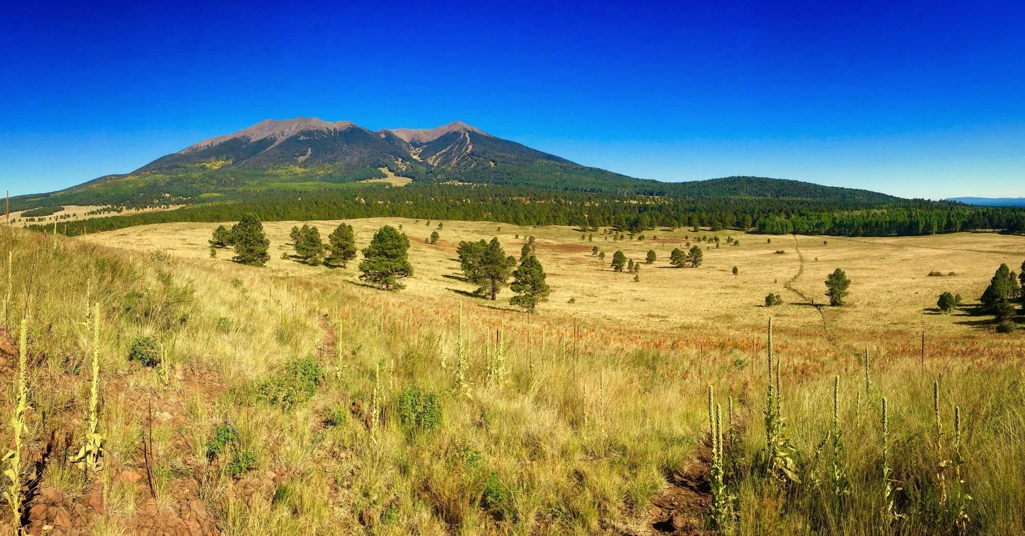 15 Fun Things to do in Flagstaff with kids [+Food, Day Trips, & More]!